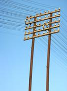 Telegraph lines - stock photo