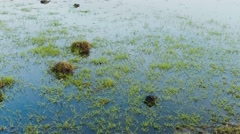 Water marsh with green grass and blue water. Stock Footage
