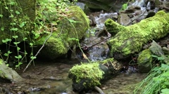 Beautiful tiny brook in forest with cold water - stock footage