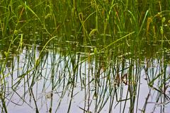 Grass in water Stock Photos