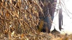 Combine harvester header during harvesting - stock footage