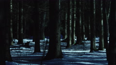 panning shot dark forest creepy trees at moonlight 1/6 - stock footage