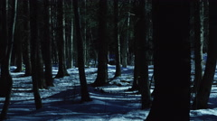 panning shot dark forest creepy trees at moonlight 2/6 - stock footage