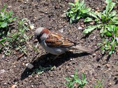 Little sparrow - stock photo