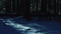 panning shot dark forest creepy trees at moonlight 5/6 - stock footage
