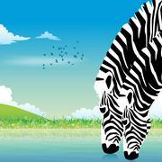 Zebra wildlife Stock Photos