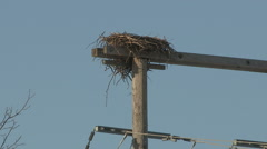 Birds nest on hydro and power poles Stock Footage