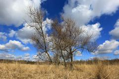 leafless tree - stock photo