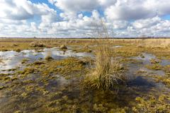 Swamp under nice sky - stock photo