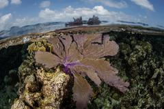 Shallow Caribbean Reef - stock photo