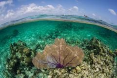 Sea Fan in Caribbean Sea Stock Photos