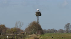 Storks and their high nest - stock footage