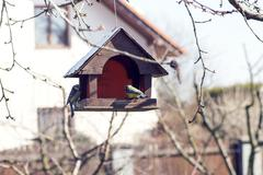 birdhouse on a tree branch with two tit - stock photo
