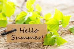 Stock Photo of Brown Label With Hello Summer And Green Branches