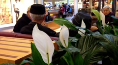 Old people chatting at rest area, focus on peace lilies Stock Footage