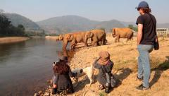 ASIAN HERD ELEPHANTS RIVER CROSSING TOURISTS Stock Footage