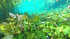 Underwater Cenote Xlakah Stock Footage