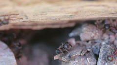 Ants closeup Stock Footage
