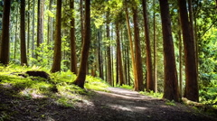 Summer forest with narrow path - stock footage