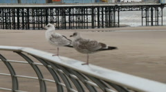 Sea gulls and pier pull focus hand held Stock Footage