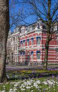 Stock Photo of Colorful crocusses in a historical street in Groningen