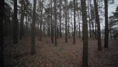 Stock Video Footage of Pine forest up the hill slope. Winter landscape