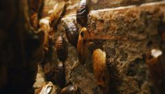 Cockroaches Home 4K Stock Footage