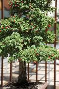 Bonsai Small Tree Plant Stock Photos
