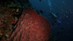 Scuba diving along reef wall covered with giant barrel sponges Stock Footage