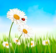 Nature spring daisy flower with ladybug. Vector illustration. Stock Illustration