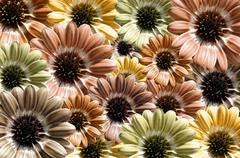 Yellow, brown background created from daisy flower bloom - stock illustration