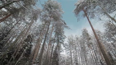 View looking to the tops of pines in a winter forest Stock Footage