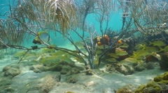 Shoal of reef fish under gorgonian sea plume coral Stock Footage