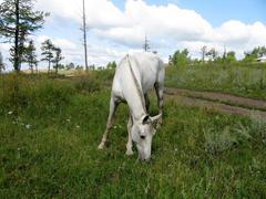 White horse on field - stock photo