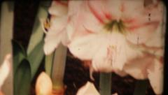 Beautiful orchids and flowers. Vintage - stock footage