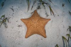 Starfish on Sand Stock Photos