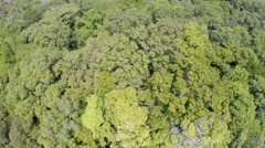 Tropical island aerial trees coast Stock Footage