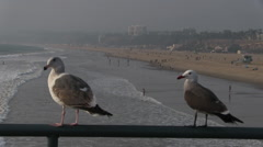 Two Seagulls On Pier Rail With Surf Stock Footage