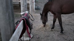Arabian horse grazing in the stall corral levade, eat hay Stock Footage