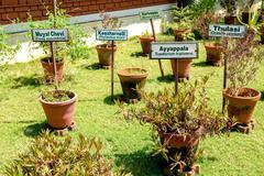 Ayurvedic herb garden Stock Photos