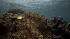 Tropical coral reef with rain drops falling on surface of ocean Stock Footage