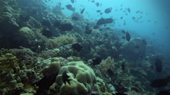 Tropical coral reef alive with fish - stock footage
