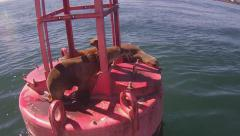 Sea Lions Resting On Bouy In Long Beach Harbor Stock Footage