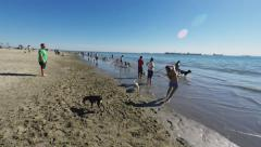 People And Dogs On Beach In Long Beach CA - stock footage