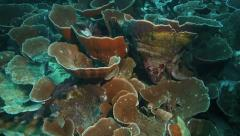 Tropical coral reef underwater Stock Footage