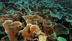 Damaged coral reef Stock Footage