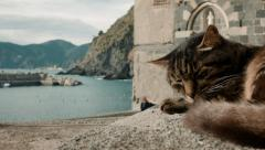 Lazy Cat sleeping next to beach Stock Footage