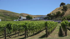 Esk Valley winery and vineyard, Hawkes bay, New Zealand Stock Footage