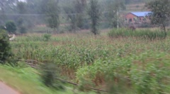 Maize (Corn) Fields and Genocide Era Buildings of Rwanda - stock footage