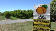 Hawkes bay roadside fresh fruit vendor, New Zealand Stock Footage